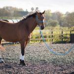 دوره آشنایی با تربیت اسب (300 ساعت بمدت 3 ماه)