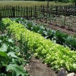 دوره کشت سبزیجات ارگانیک با مواد دور ریختنی (100 ساعت بمدت 2 ماه)