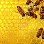 دوره زنبورداری